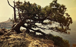 Picture rock, loneliness, tree