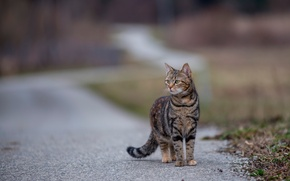 Picture cat, kitty, bokeh