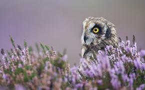 Picture macro, flowers, owl, bird, profile, lavender