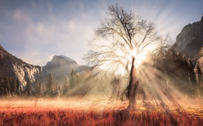 Wallpaper winter, forest, the sun, rays, light, mountains, branches, tree, USA, California, February, Yosemite national Park