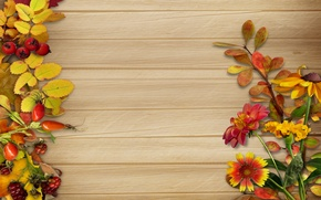 Picture autumn, leaves, flowers, berries, background, vintage, background, autumn, leaves