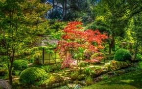 Picture greens, trees, Park, HDR, Japan, house, the bushes