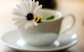 Picture flower, blur, Cup, insect, saucer