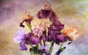 Picture flowers, paint, figure, irises