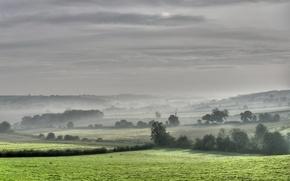 Wallpaper trees, field, Fog