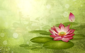 Picture flower, paint, vector, petals, Lotus