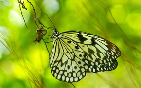 Picture glare, background, butterfly, A blade of grass