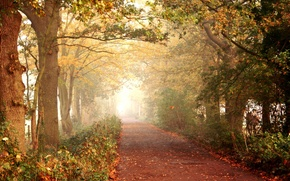 Picture road, autumn, forest, leaves, trees, nature, walk, path