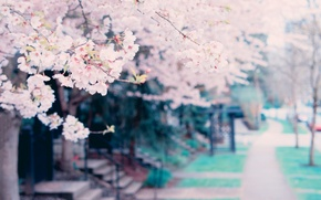 Picture flowers, tree, spring, spring, blossoms, tree
