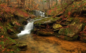 Picture autumn, forest, water