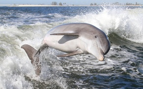 Picture water, squirt, Dolphin, mammal