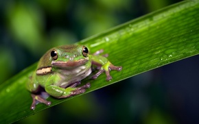 Picture macro, background, frog