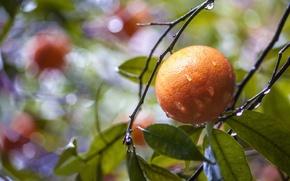 Wallpaper leaves, drops, glare, orange, branch, after the rain