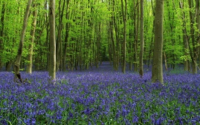 Picture forest, trees, flowers, glade, bells, alley