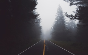 Wallpaper nature, forest, haze, road, fog