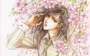 Picture Sakura, tie, shirt, guy, manga, flowering, long hair, art, sight, Mamiya Oki, Platonic Dance