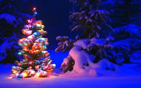 Picture garland, spruce, forest, snow, light, winter, trees, tree, lights, tree, lights, tree, Snow, night, winter