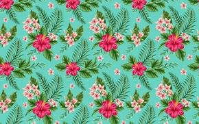 Wallpaper flowers, tropics, plumeria, hibiscus