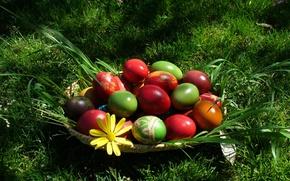 Wallpaper eggs, Easter, grass