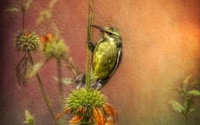 Picture bird, figure, beak, stem