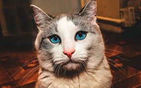 Picture cat, Mustache, nose, Cat