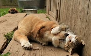 Wallpaper dog, friends, cat