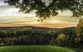 Picture grass, trees, branches, field, horizon, Canada, forest, meadows, Quebec