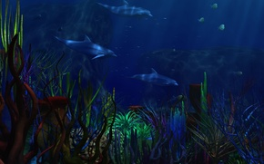 Picture sea, algae, dolphins, underwater world, corals. dark blue Poncini background