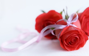 Picture white, background, gift, rose, Bud, tape, red