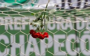 Picture flowers, memory, mesh, football, roses, gate, Brazil, stadium, Arena Konda, Epicoene, Chapeco