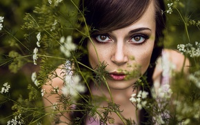 Picture grass, look, girl, face