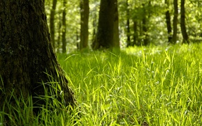 Picture green, grass, sunshine