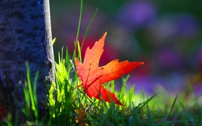 Picture autumn, grass, macro, sheet, tree, paint