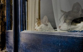 Picture house, cats, window, observation
