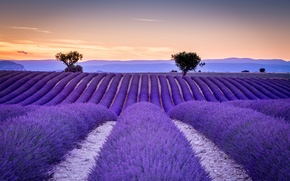 Picture field, France, the ranks, lavender, Provence