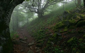 Picture trees, fog, stones, trail, 152