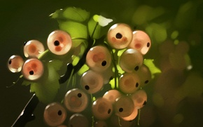 Picture leaves, branch, currants, art, pink currants