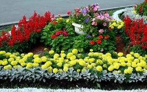 Picture flowers, Garden, flowerbed