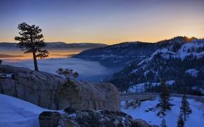 Wallpaper Tree, winter, sunset