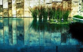 Wallpaper grass, water, pond, wall