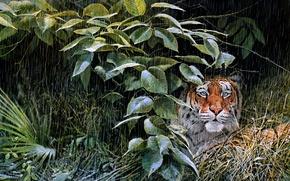 Picture Tigr, dozhd, listva