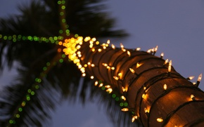 Picture the sky, lights, Palma, trunk