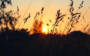 Picture summer, sunset, grass