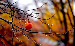 Picture autumn, drops, branches, blur