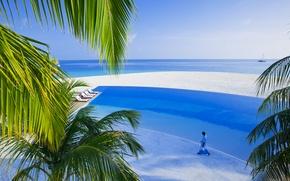 Wallpaper sea, palm trees, island, pool, the Maldives, white sand