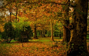 Picture autumn, leaves, trees, nature, Park, photo, trunk, Spain, Madrid, Campo