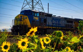 Picture sunflowers, nature, rails, train, railroad, locomotive
