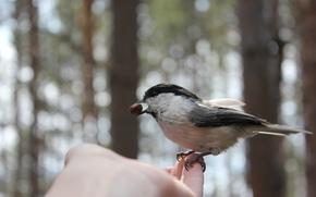 Picture bird, hand, nut