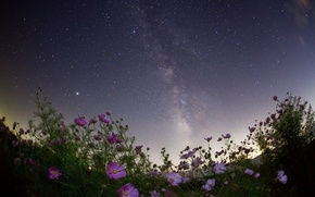 Picture field, summer, the sky, stars, flowers, lilac, pink, field, starry sky