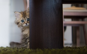Picture cat, table, Daisy, © Ben Torode